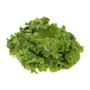 Groene batavia kropsla